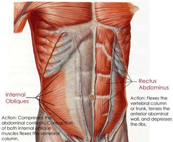 jason ferruggia shoulder pain