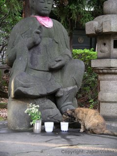 Cat and buddha at Zozoji Temple, Tokyo.