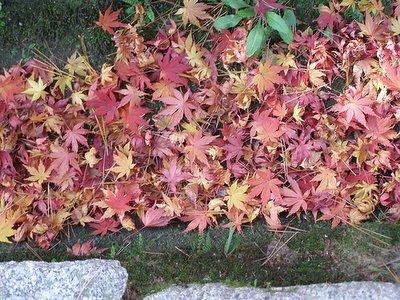 Fall leaves at Myoshinji Temple, Kyoto