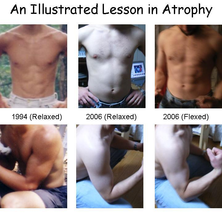 Gaijin for Life: Where Did All the Muscles Go?