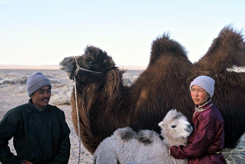 filme os camelos tambem choram