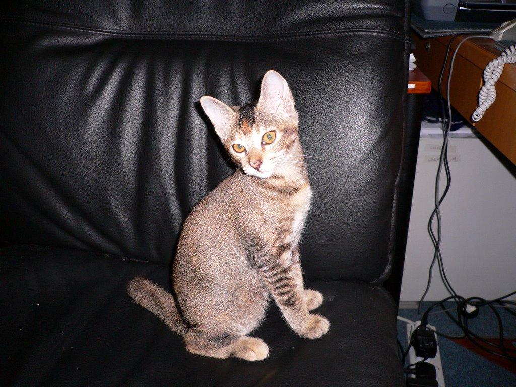 CatDonnas Cats: Lucie & Boonie Send Their Love