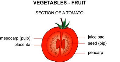 diagram of tomato infopic diagram of inside of a 747