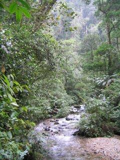 Photo of Liwagu River in Mount Kinabalu Park, Sarawak, Malaysia