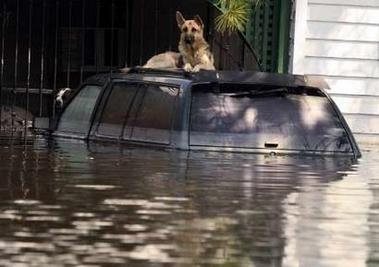 Many people had to abandon their pets as the fled New Orleans