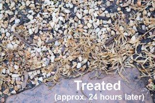 Natural Grass Killer For Asphalt Parking Lots