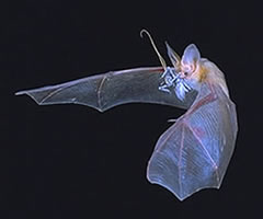 By 1995, bat swerve experiments had toppled our most basic ideas about how neurons communicate.