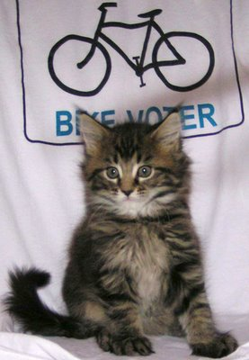 Image of kitten sitting on bike voter T-shirt