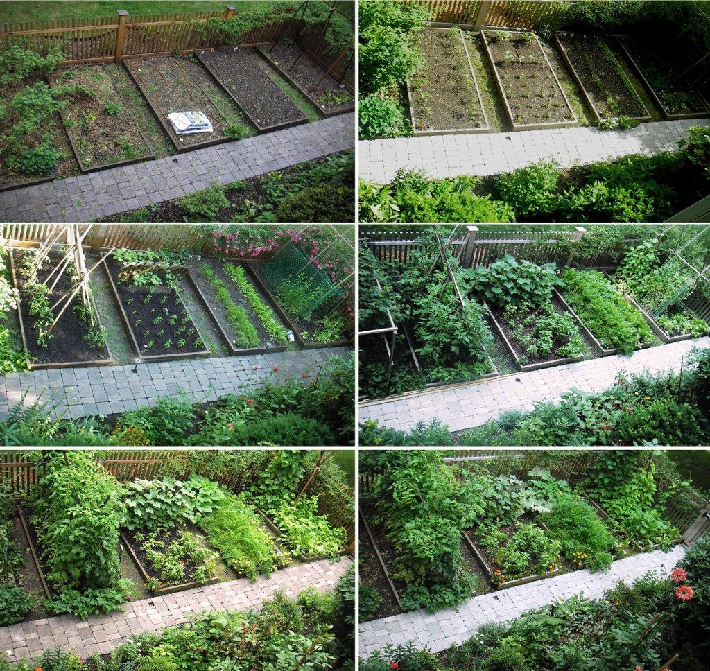 skippy's vegetable garden: skippy's garden: from start to peak