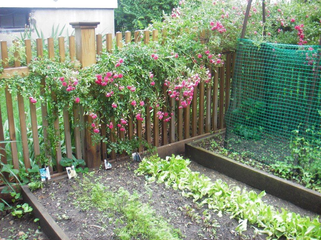 skippy's vegetable garden: june 2006