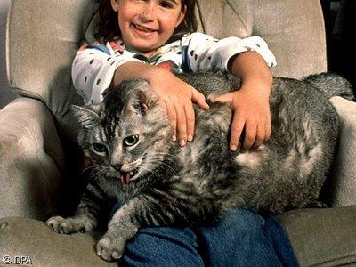 Mitmachblog: Gute Fotos von dicken Katzen