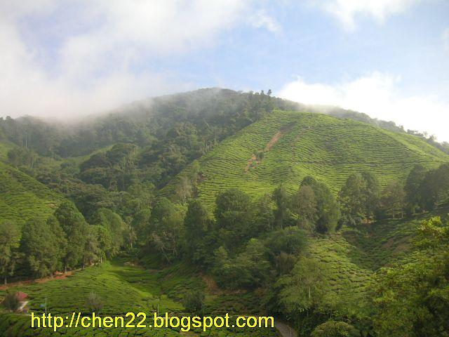 A Journey Called LIFE   : Sg Palas Boh Tea Plantation