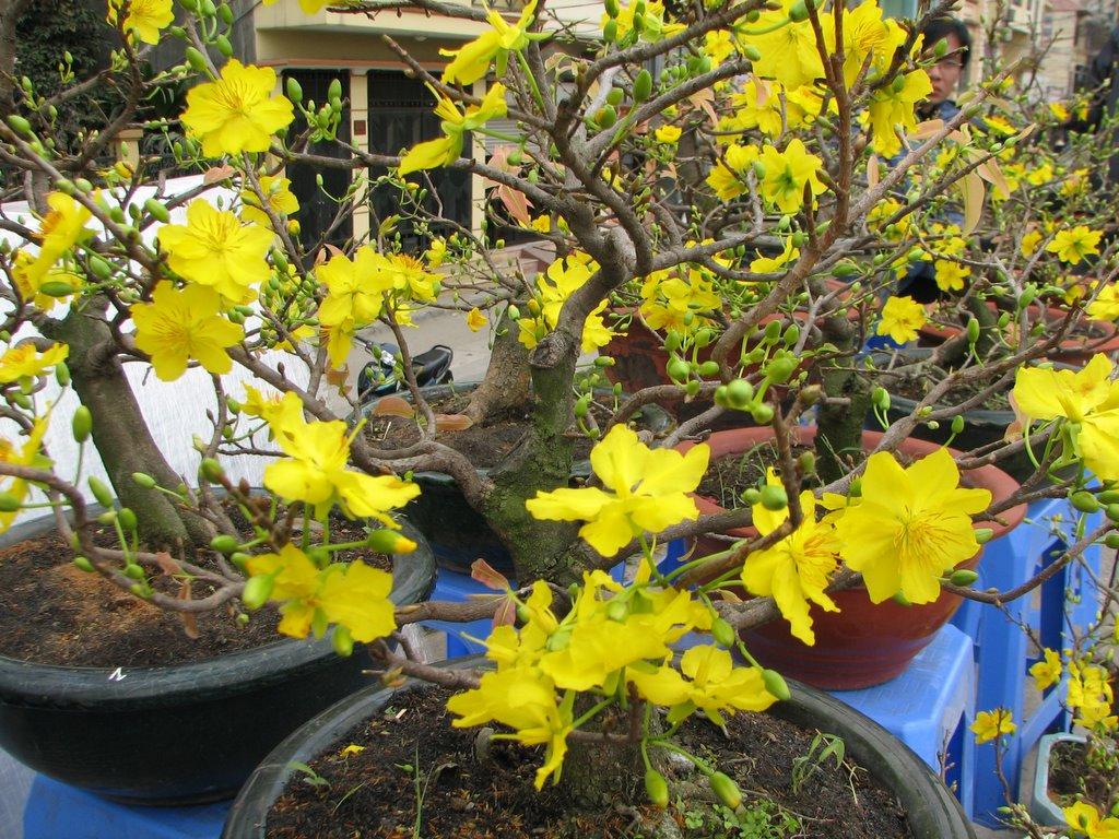 Vietnamese God: Flower Market
