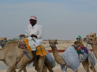 A rider with some curious camels