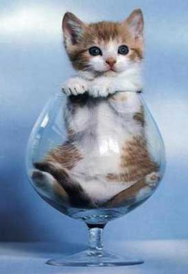 Funny Glass Cat