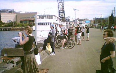 Crowds watching dolphins off Taranakai Wharf
