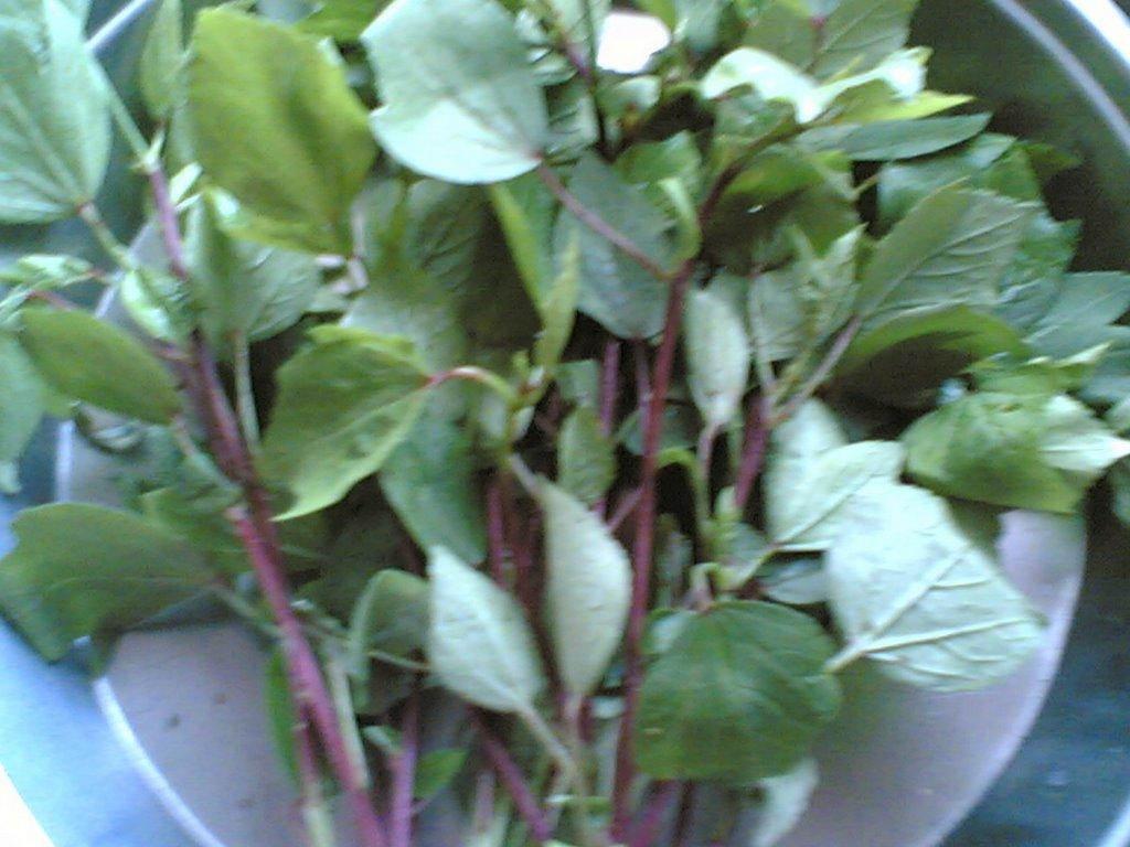 Sailu S Food Indian Food Andhra Recipes Herbs
