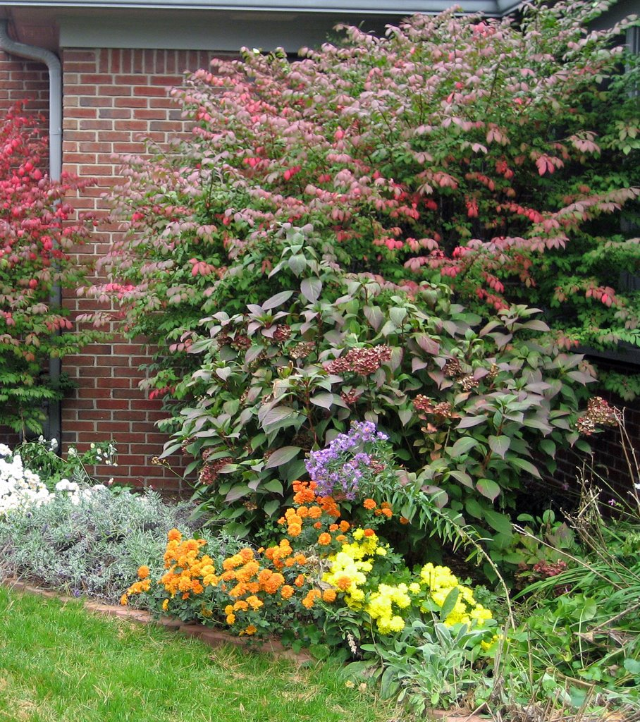The Truth About Burning Bush