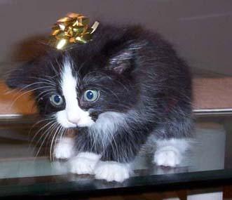 S E N S U A L A G O N Y Bonsai Kitten Is Cruel Nahhh Not Nearly As Cruel As