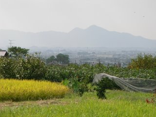 View of mountains and paddy fields