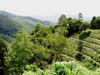 Green Season in Phuket