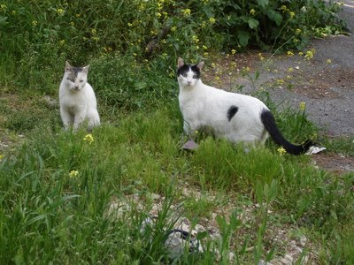 Two cats looking at me