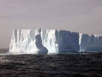 Huge tabular icebergs, calved from the ice shelf in the Southern Ocean's Weddell Sea. (Photo courtesy of Mike Vecchione.)