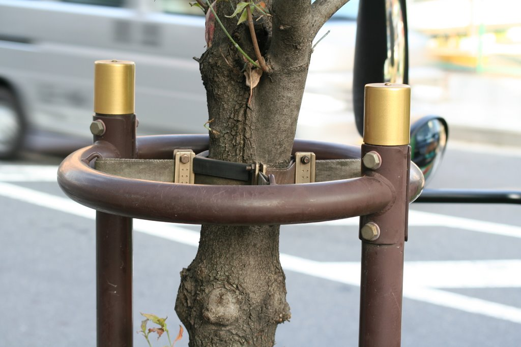 here and there japan tree support on the streets of tokyo