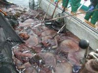 The Japanese rightist: Giant Jellyfish and garbage