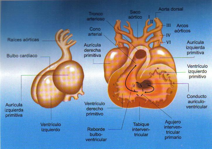 Cavidades del corazon yahoo dating 5