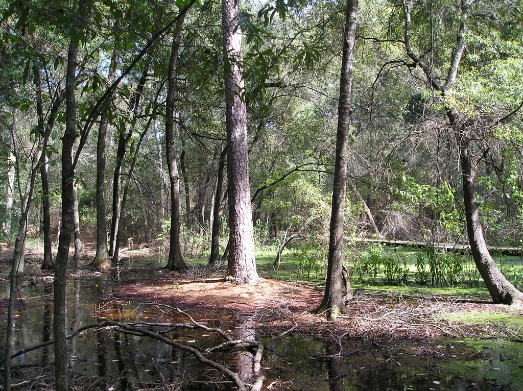 Free Nature Trails In Houston
