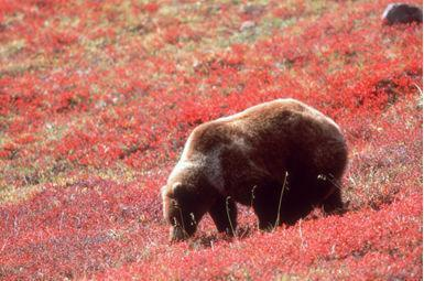 Bear suggests 'Visit Alaska!' and http://www.dced.state.ak.us/