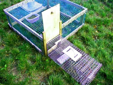 Best Traps For Feral Cats