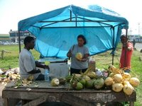 Coconut Stall in Trinidad/Kate Yuan
