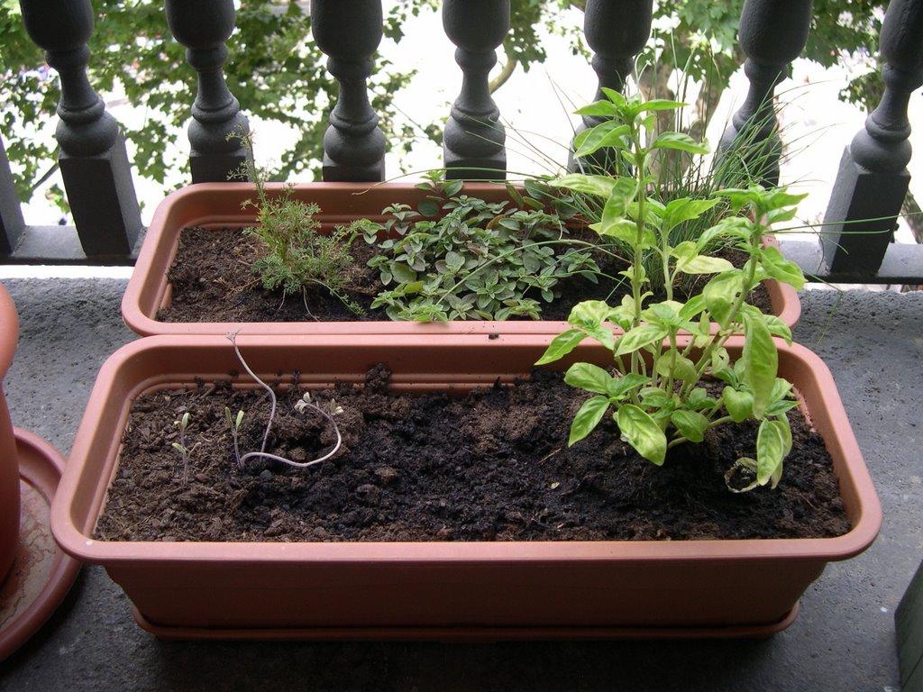 Verduras en mi balc n huerto urbano 26 el caso de las for Tipos de jardineras