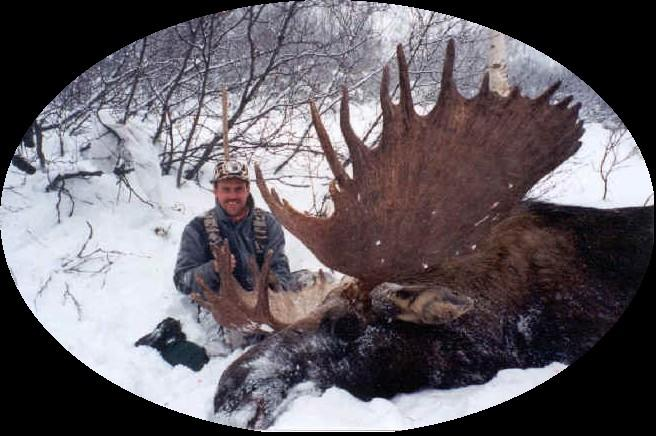 Tarryall Elk Camp: FORT CARSON MOOSE MOVED TO GRAND MESA