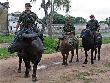 Water buffalo army - photo#54