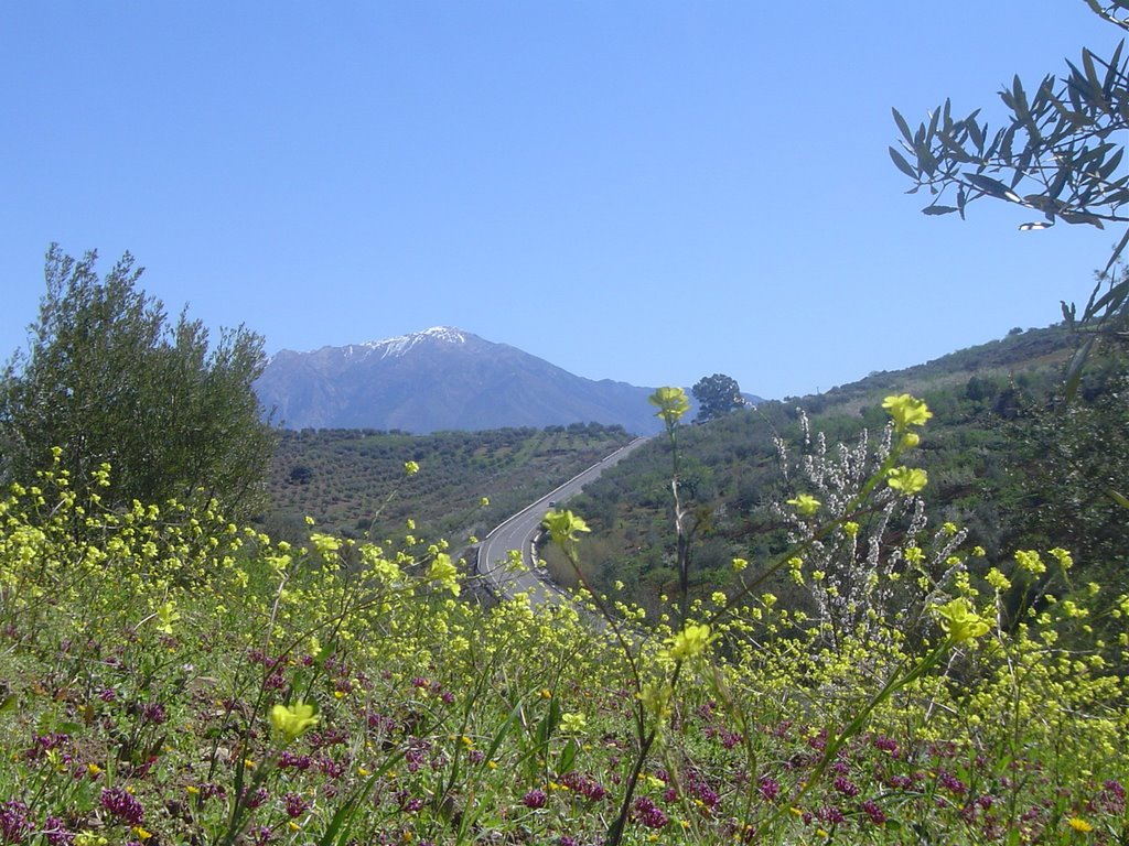 Ensliga bergen