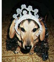 dog with party crown