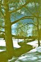 snowy path