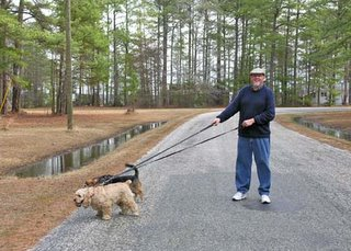 man walks dogs