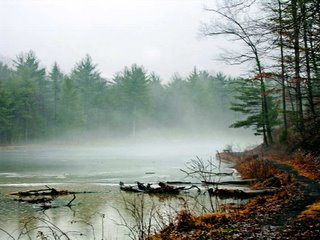 pond in fog
