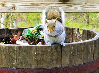 squirrel on barrel