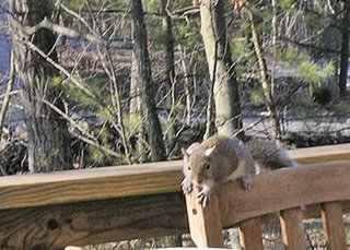 squirel on rail