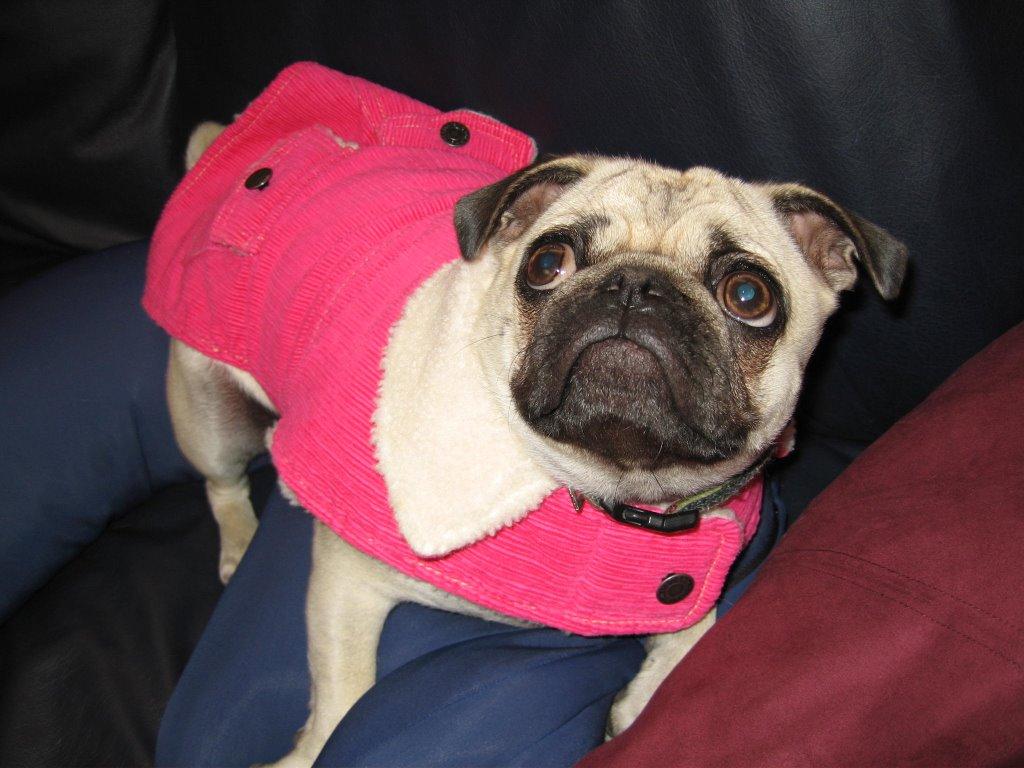 Pug Baby Cute Clothes