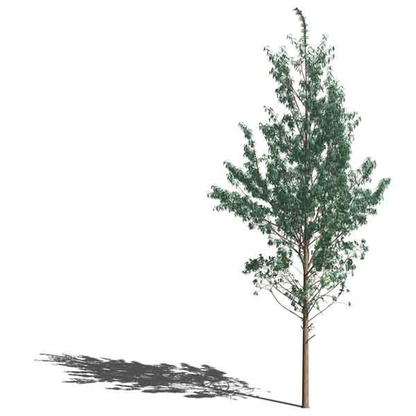 The Digital Architect   net (archived): Revit® Landscape?