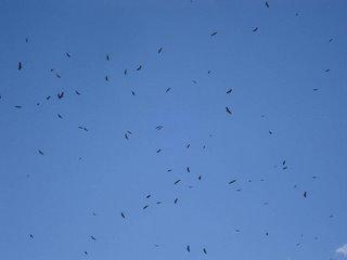 500 Vultures