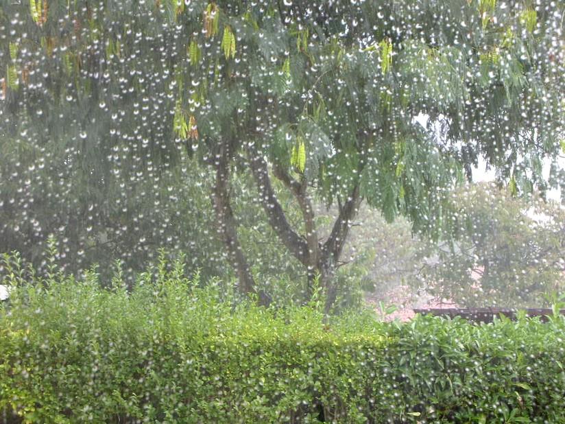 Plantes des jardins et des chemins jardins sous la pluie for Plantes des jardins