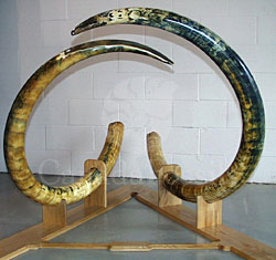 SalvoNews: Mammoth tusks - ethics, fakes and myths