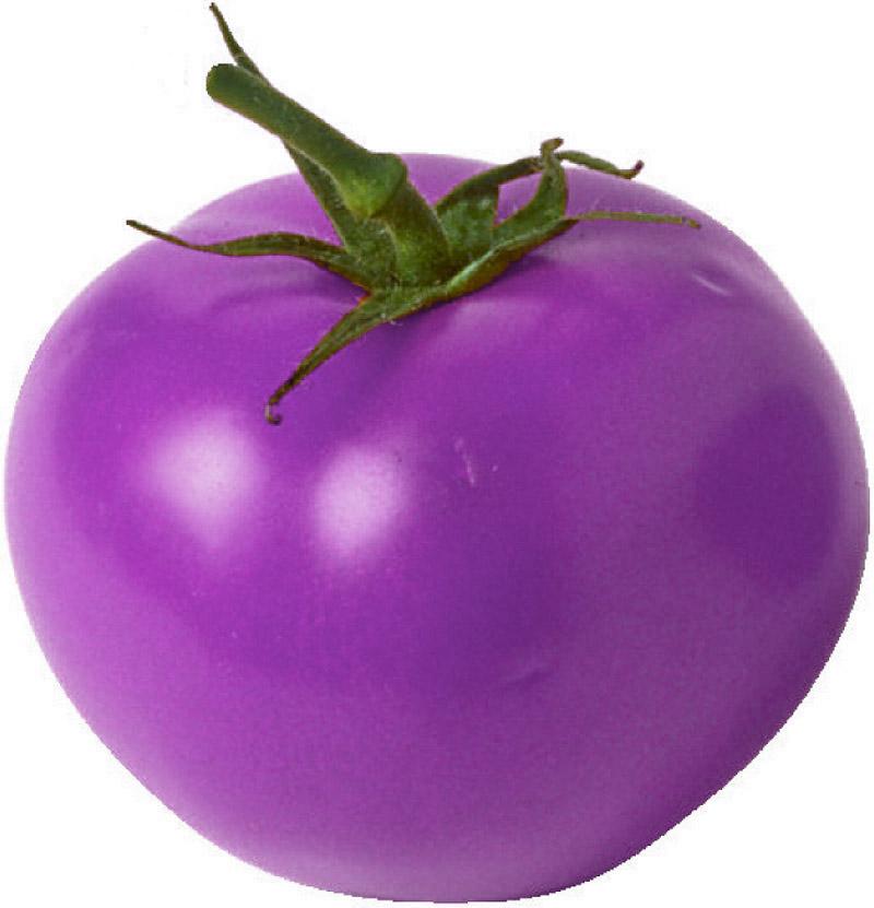 Nature Science Purple Nasa Purple Sea Urchin Purple Tomato